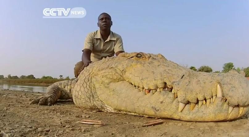 Guardians of the Sacred Crocodiles