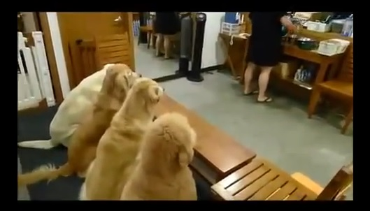 Dogs in China Pray Before Eating Meal - AMAZING!