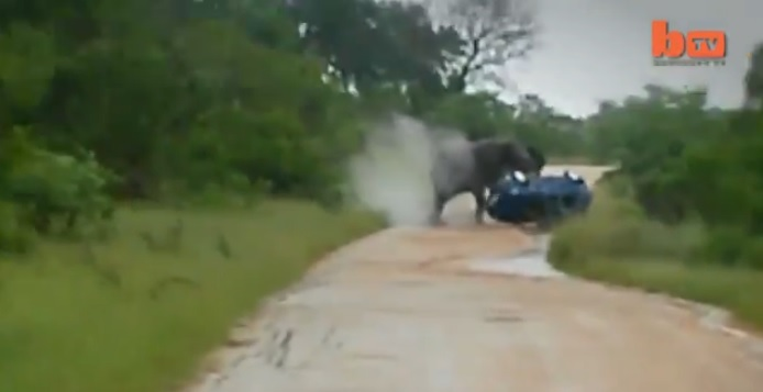 Elephant Rolls Car: Elephant Attack Caught On Camera