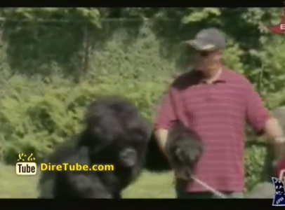 Amazing and Funny Video Collection - July 22, 2012