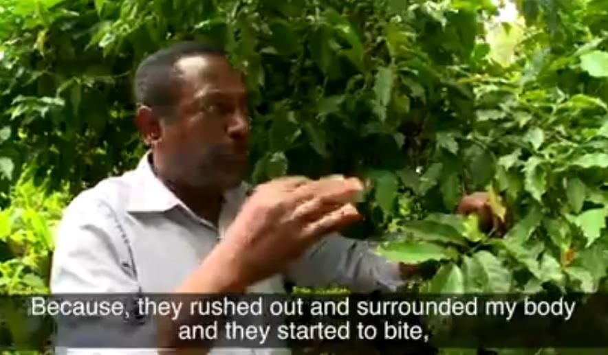 Wipo - Daniel Assefa, Inventor of a Natural Pesticide, Ethiopia