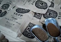 American family Grow Teff and Distribute it in USA