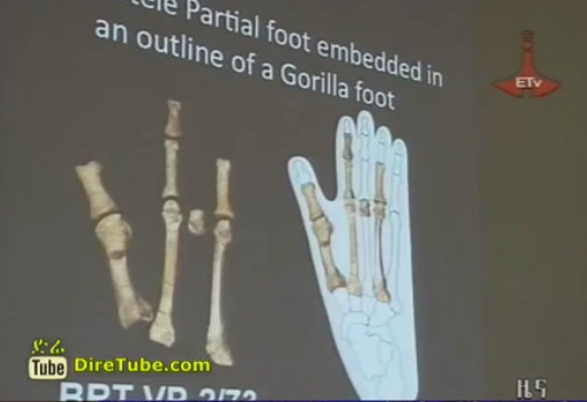 3.4 mln Years Old Partial Foot Fossil Discovered in Afar, Ethiopia