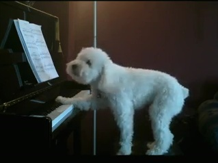 Yehiwota Hiwot by Dog Playing Piano