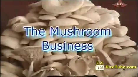 The Mushroom Business in Ethiopia