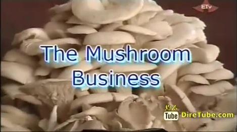 The Mushroom Business in Ethiopia