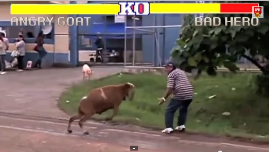 Street Fighter - Fight with a Sheep