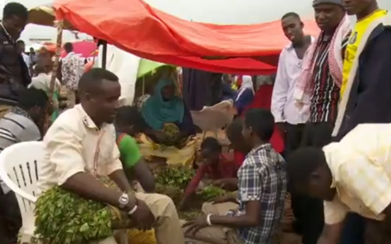 UK ban means Somalia flooded with low price khat