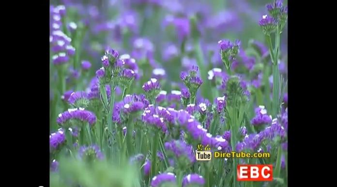 Investmenet on Floriculture in Ethiopia