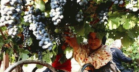 Ethiopia unexpected wine tourism destination