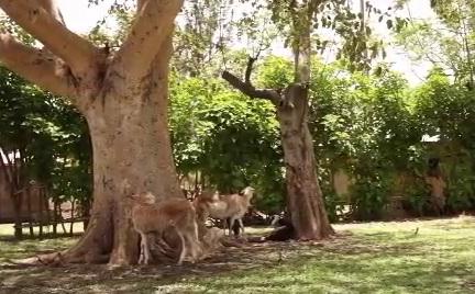 The CDM - Trees Of Life