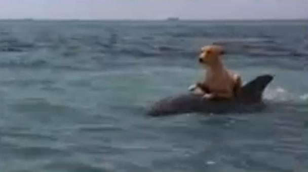 Dolphin and Dog - Let's be Friends