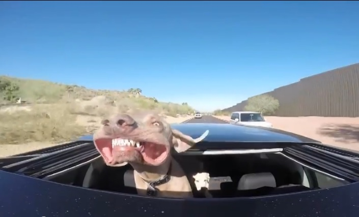 The Laughing Dog Riding in a car