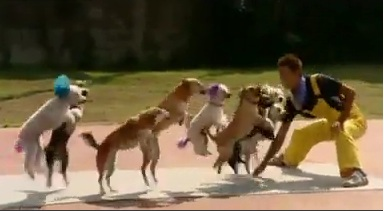 The Most Dogs Skipping on Rope Becomes a World Record
