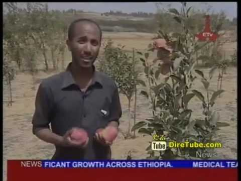Apple Production has shown significant growth across Ethiopia