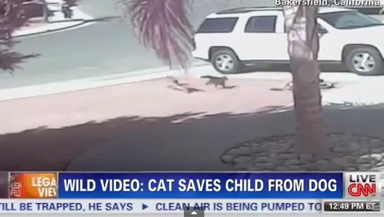 Hero Cat Saves Young Boy From Dog Attack In Bakersfield