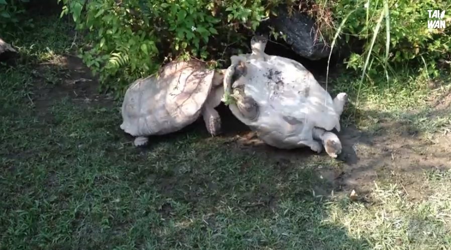 An Upside-Down Tortoise