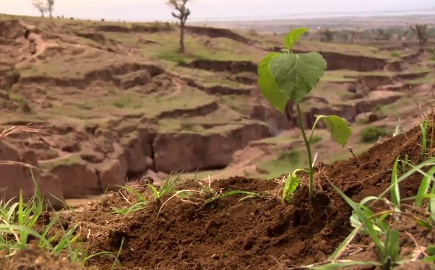 Planting Hope in Ethiopia: Reversing a Destructive Past