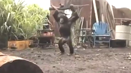 Chimpanzees With AK-47 Gun - What do you call this Guys?