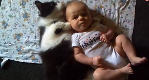 Funny Video - Cat Loves Baby Compilation - Cat and Baby - Cats Protect Babies