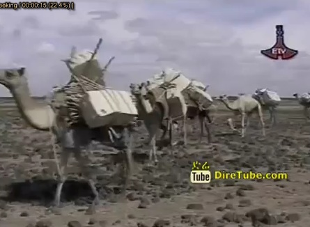 Contraband Transported By Camel Have Been Put Down In Shinila Zone