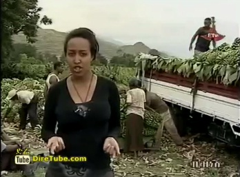 International Saudi's Banana Business in Ethiopia