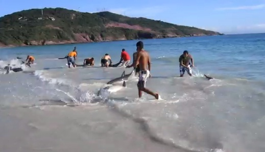 30 Dolphins stranding and Incredibly saved Extremely rare event