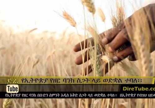 Ethiopia's seed banks - under threat from G8 plan to 'develop' Africa