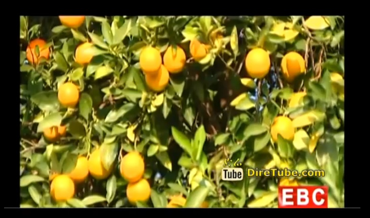 Less Revenue Gain from Ethiopia's Traditional Horticulture Production - September 29,2014