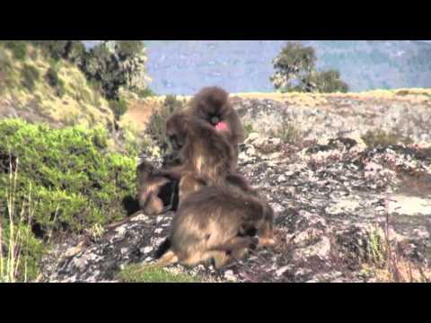 Naturetrek - Best of Ethiopia & the Bale Mountains