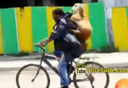 Seifu Fantahun Show - Interview with Amazing Sheep Seller Abebe -Using Bicycle as Transport System