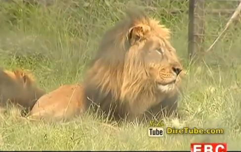Ethiopian Tourism - Born Free Ethiopia at Holeta