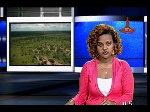Ethiopian News - The Latest Full 1PM Amharic News - Dec 31, 2013