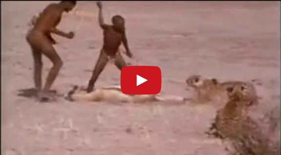 Amazing Video - These Guys Stealing food from Cheetah