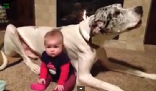 Funny Video - Best Babies and Animals Compilation 2014